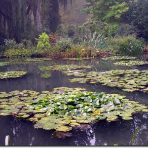 Water_lilies_60X80